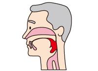 飲み込む(咽頭期)